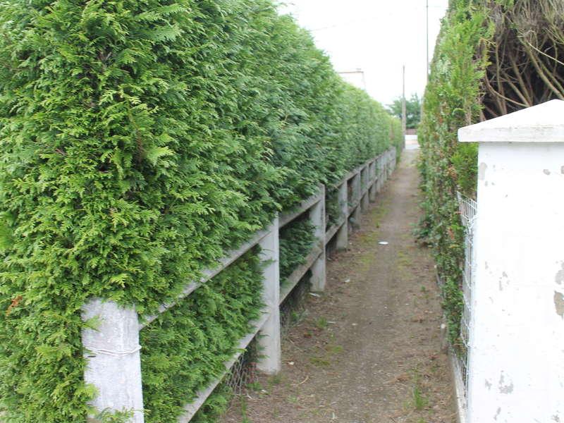 Dessouchage des thuyas et mise en place d'une clôture béton de type Nicolas ton Pierre