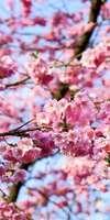 murielle Calata, Fleurs de Bach à Bourg-la-Reine