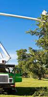 Ent fays , Abattage, élagage et taille à Saint-Symphorien-d'Ozon