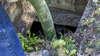 ART Débouchage, Vidange de fosse septique  à Maintenon