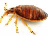 Les insectes dans les auberges de jeunesse