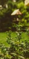 Mejan Gino, Création et aménagement de jardins à Bron