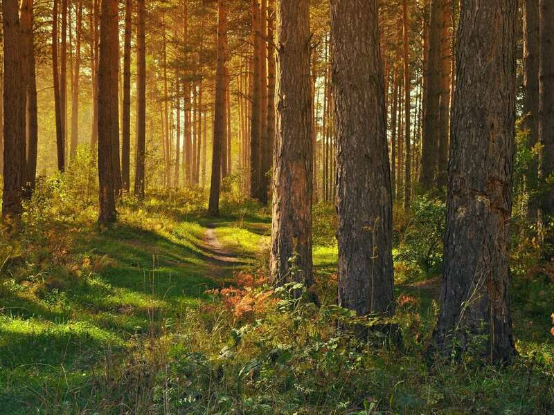 forest-89179_1920