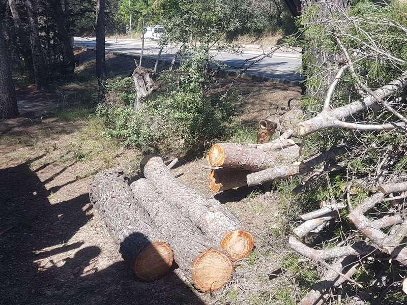 Ramassage troncs, branches et déchets verts à Puyricard
