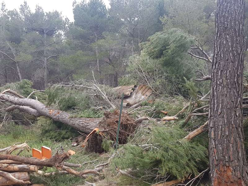 Évacuation de 8 pins dangereux pour la maison Ventabren
