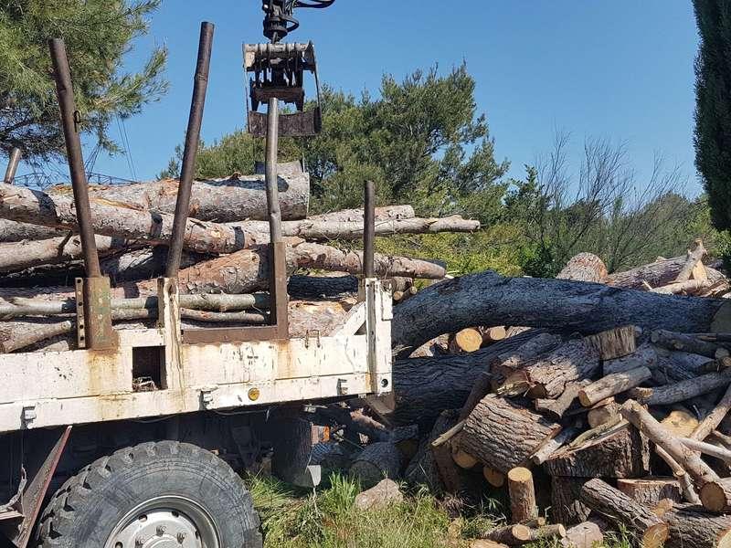 Enlèvement arbres malades Aix-en-Provence