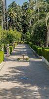 MAS FLORES, Création et aménagement de jardins à Cabestany