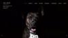 Image site web educateur canin all dog