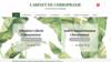 image site web cabinet de chiropraxie cellerin et Ranoarimanana
