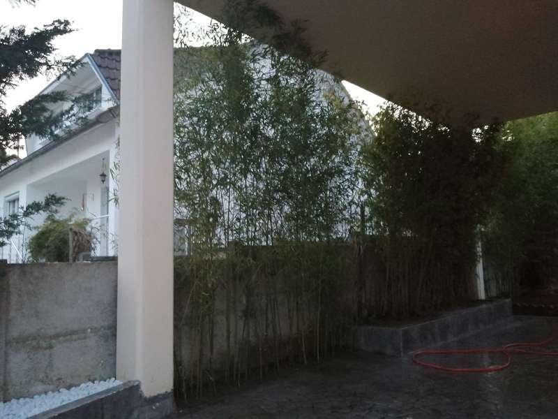 apres_plantation_bambou