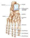 squelette-pied-osteo-du-sport-a-versailles-78