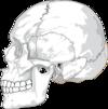 crane osteopathe cranien versailles 78