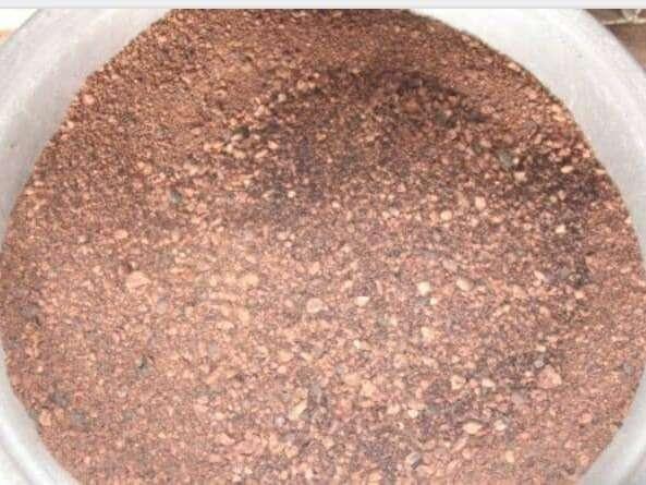 Amandes de karité concassées et torréfiées. La torréfaction permet de libérer l'huile des autres composantes cellulaires (protéines, amidon).